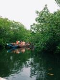 Mangroves | Manguezais