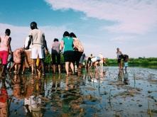 Replantando os manguezais